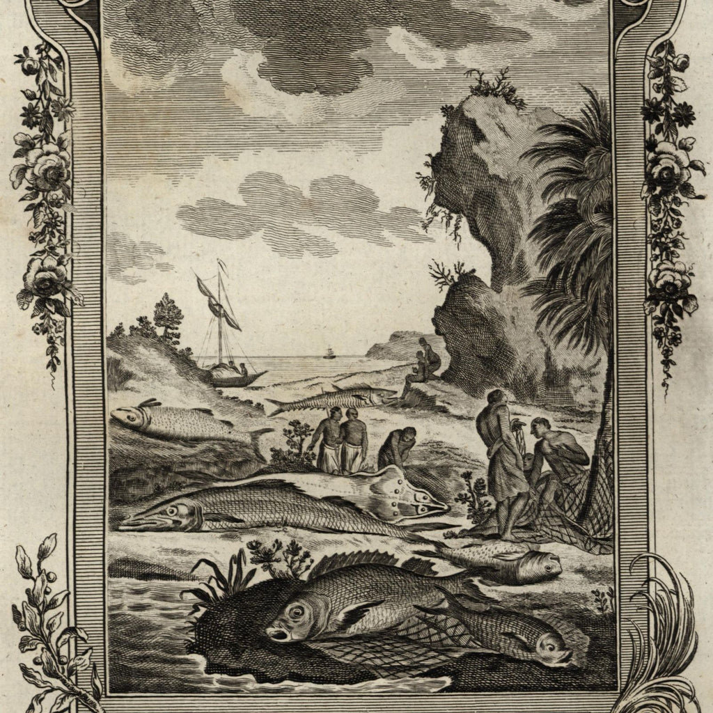 Africa Sierra Leon fish species natives fishermen 1778 nice old engraved print