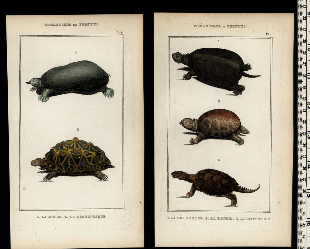 Turtles Tortoises c.1830's collection old prints Natural History Lot of 4