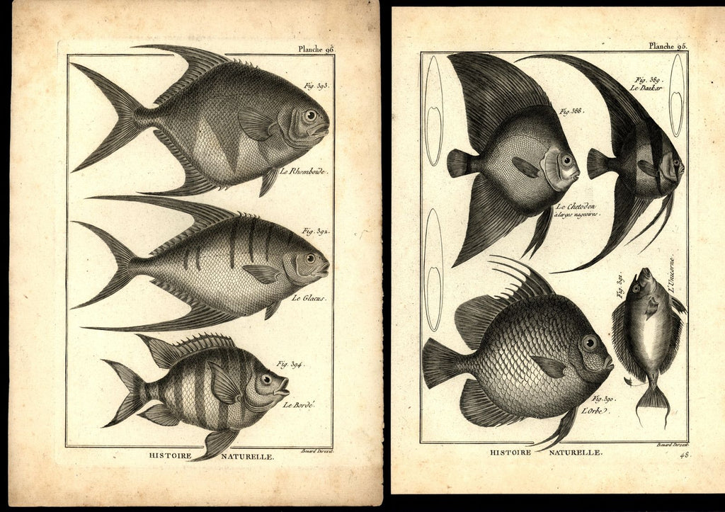 Ichthyology c.1770-80's Fish images 18th century engraved prints lot of 8 Benard