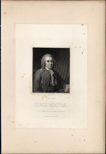 Carl Linnaeus Swedish Botanist 1834 rare engraved portrait print India proof