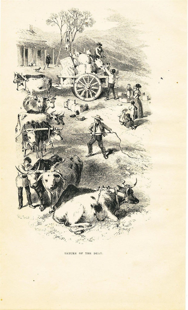 Farm oxen scene Australia 1853 scarce original antique wood engraved view