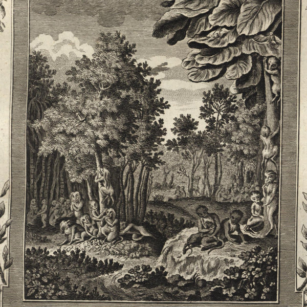 Ceylon monkey species jungle scene 1778 nice old engraved print
