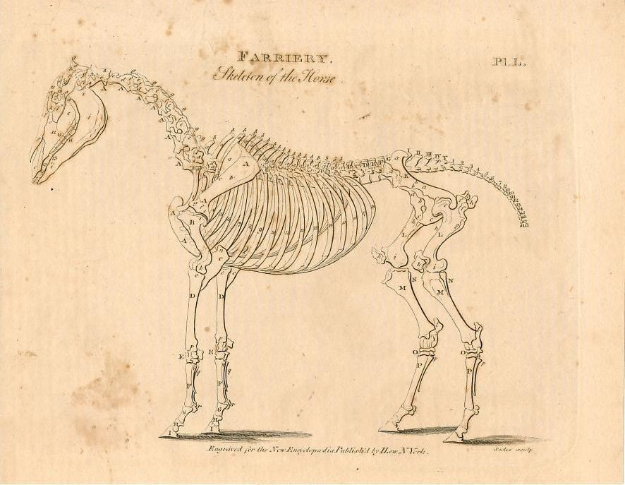 Horse skeleton 1807 rare early American anatomy print