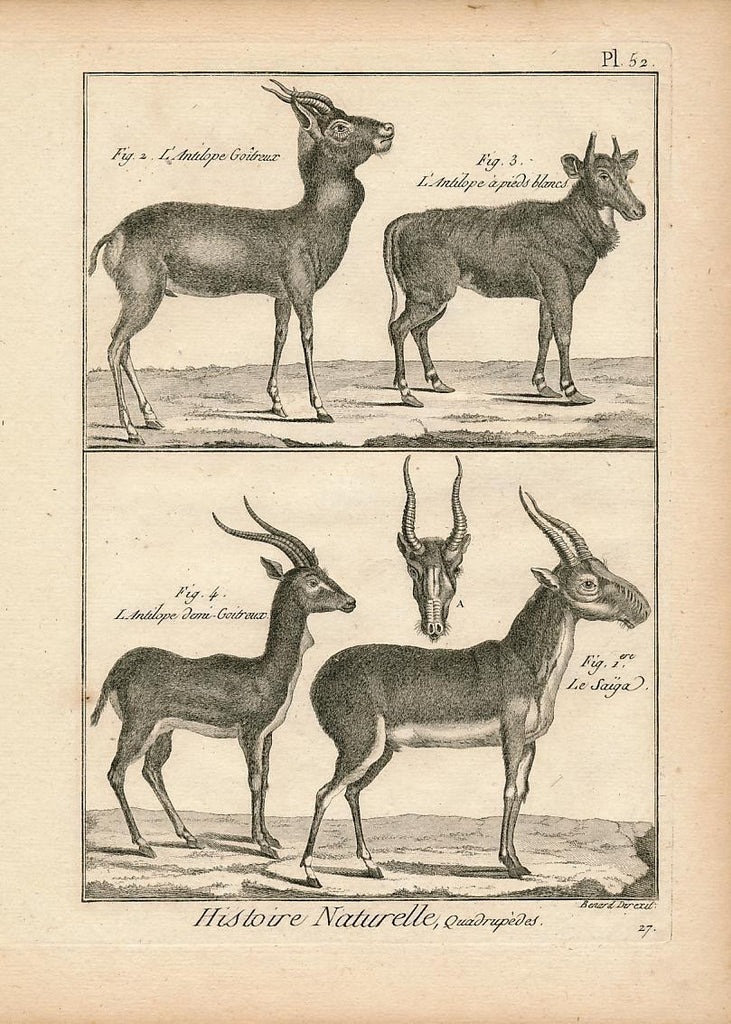 Goitreux & Pieds blancs African Antelope fine 18th Century antique Animal print