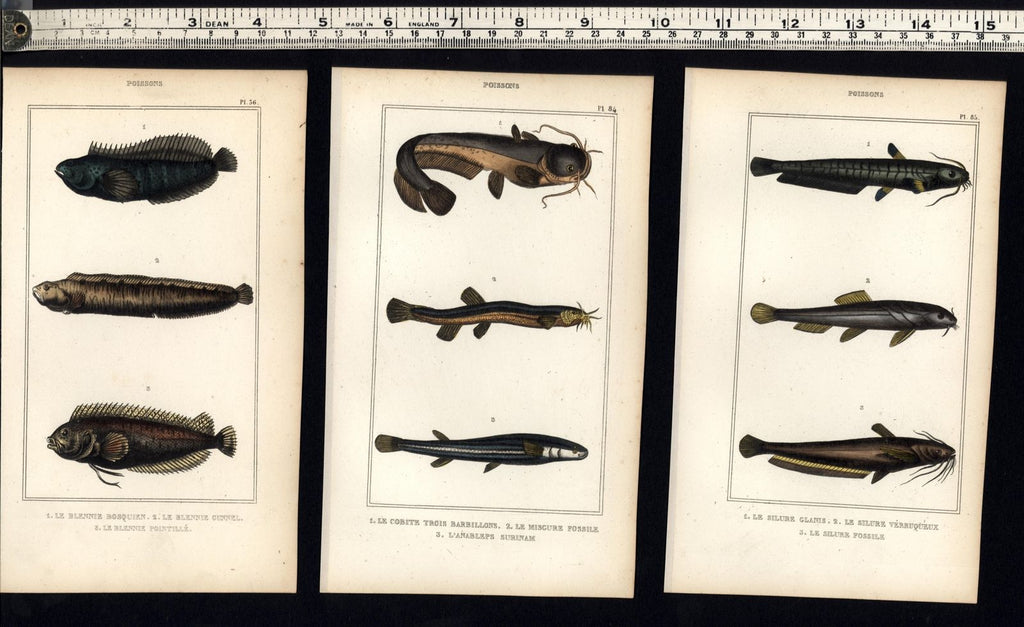 display collection Fish Poissons c.1830's group 10 fine old hand colored prints