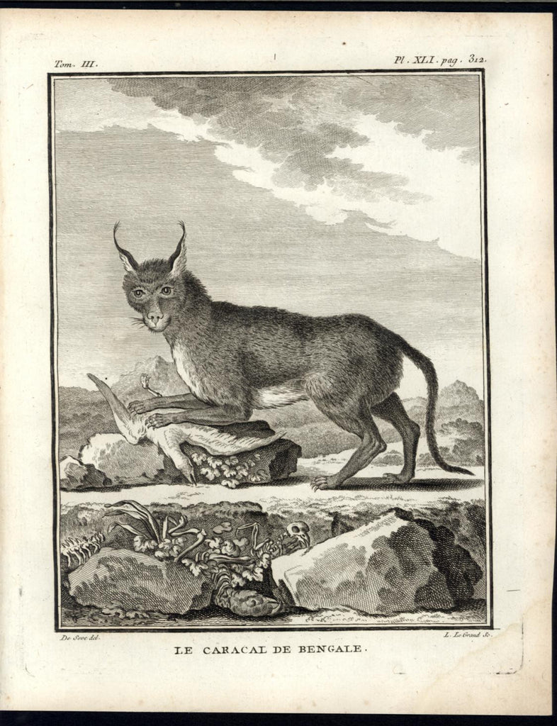 Bengal Caracal Desert Lynx Wild Cat 1776 great old engraved Animal print