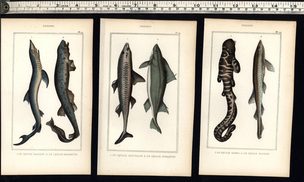 Fish Poissons c.1830's nice display collection 6 fine old hand colored prints