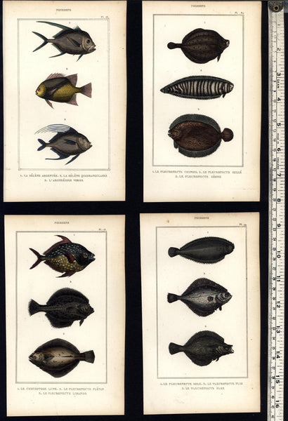 exotic Fish Poissons c.1830's display collection 8 fine old hand colored prints