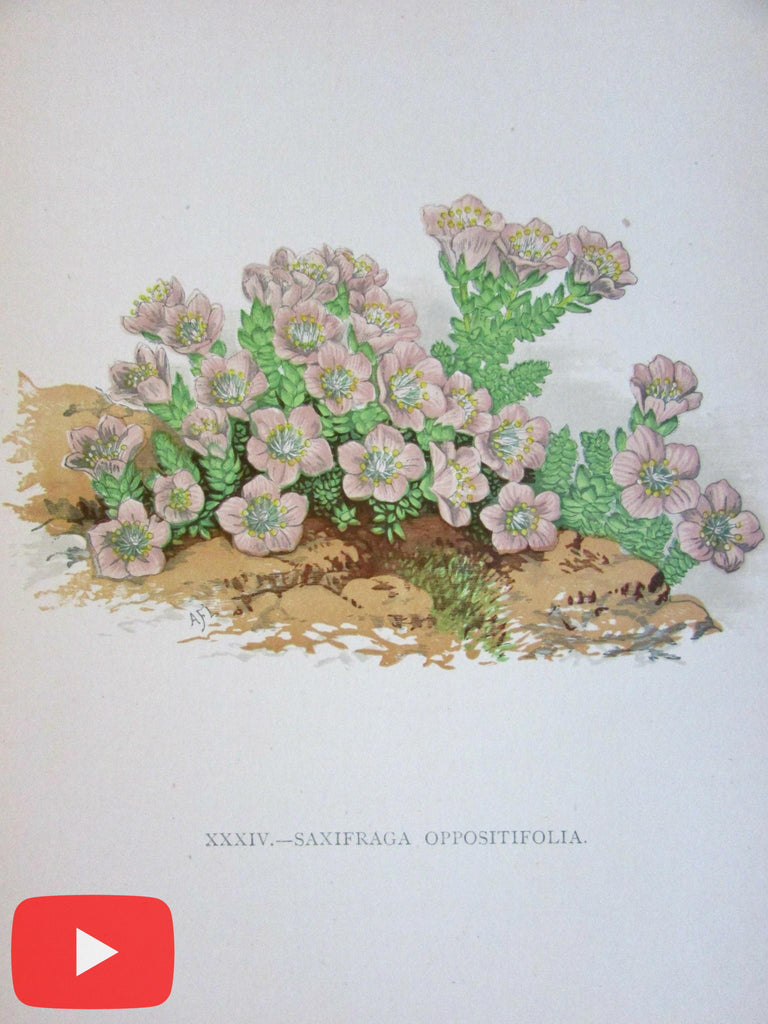 Botanical old prints c.1890's lot of 10 color lithographs flowers plants