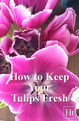 How to Keep Your Tulips Fresh | Blog | Home and Timber