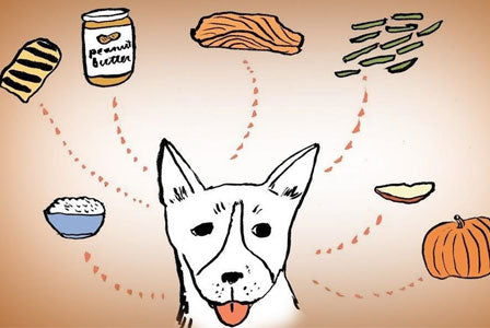 Human Foods That Are Great For Your Dog | Flea Away