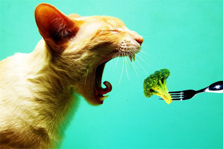 Best Human Foods For Your Cat | Flea Away