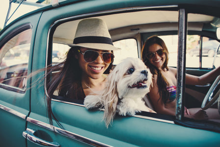 Tips For Road Tripping With Your Dog | Flea Away