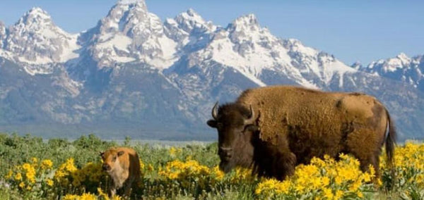 Wyoming Billionaire Plans To Buy Around 15% Of The Planet To Protect Its Nature