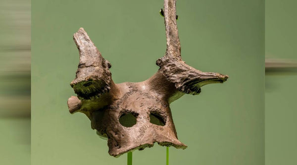 11,000-year-old Spiritualized Deer Masks Whisper Tales Of A Forgotten World
