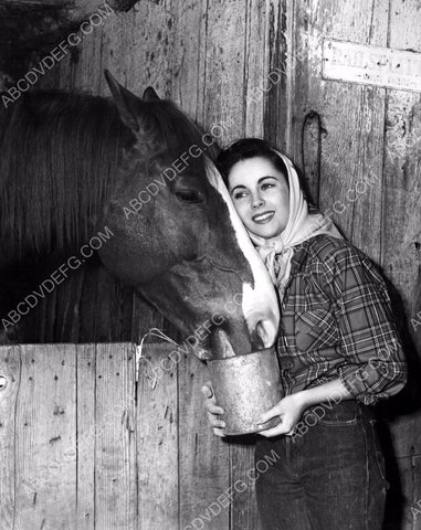 animal lover Elizabeth Taylor feeds the horse 8b20-0990