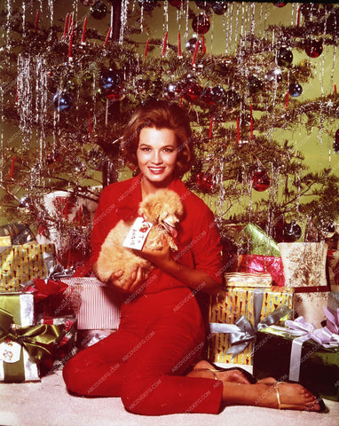 Angie Dickinson her cute dog by Christmas Tree wishing all merry 8b20-2134