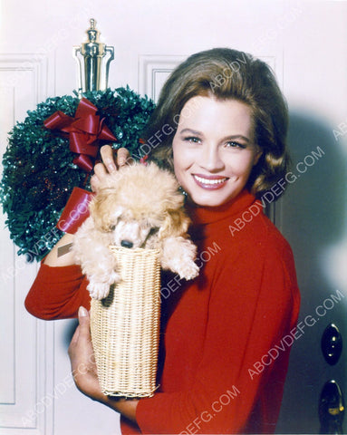 Angie Dickinson and her cute dog prepare for Christmas 8b20-3841