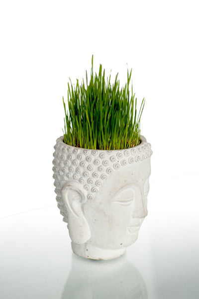 Buddha Head Planter - Cement