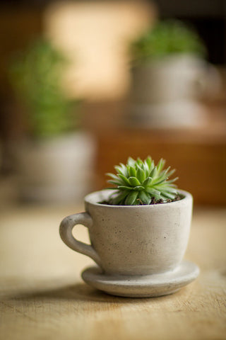 "Cement ""Tea Cup"" Planter"