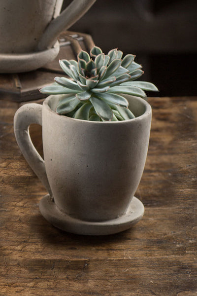 "Cement ""Coffee Mug"" Planter"