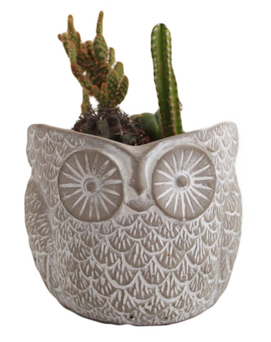 Owl Planter: Small