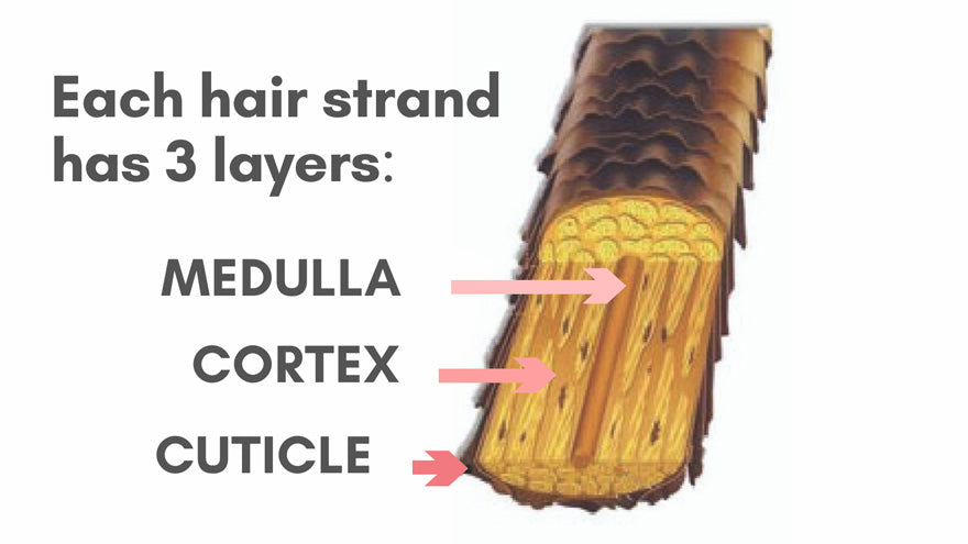 Moisturizing Your Hair | Medulla, Cortex, Cuticle | CharlieCurls Heatless Curls