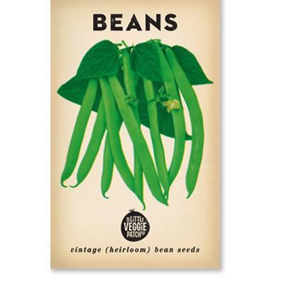 Little Veggie Patch - Bean 'Windsor Long Pod' Heirloom Seeds