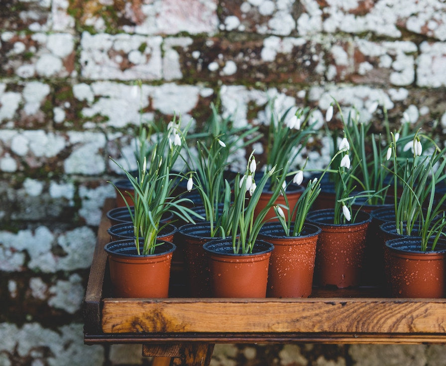 Gardening In Small Spaces: How To Build A Container Garden