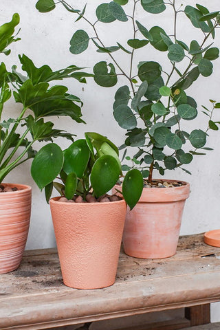 Terracotta Pot - How to Care for Indoor Plants in Winter - Blog Post - | Throw Some Seeds - Australian Gardening Gifts & Eco Products Online!