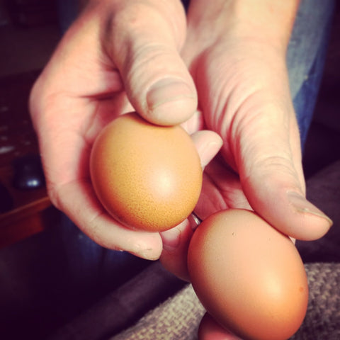 Free Range Eggs from Backyard Chickens