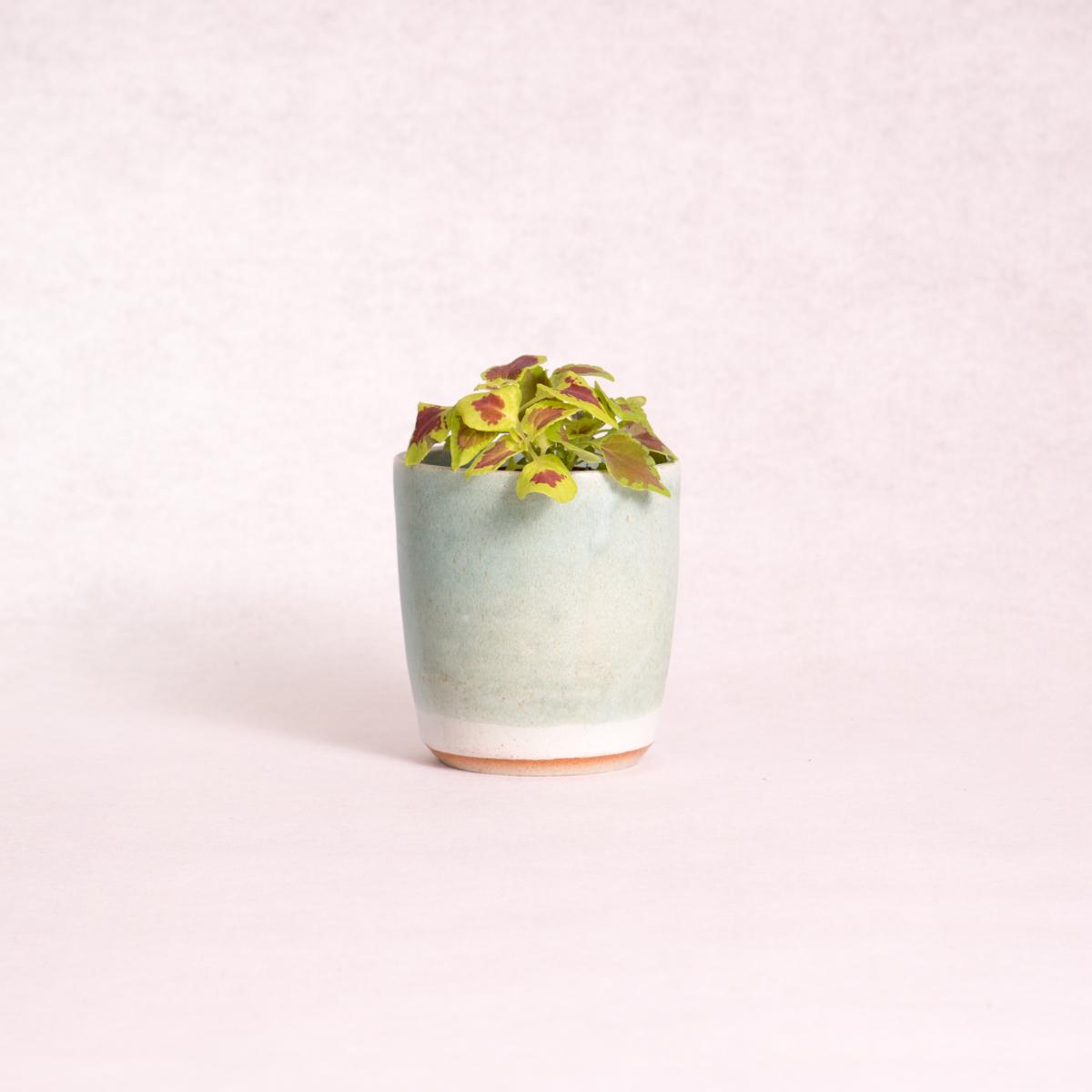 Ceramic Planter Pot - Small (Assorted Colours!) - Ceramic Planter - Throw Some Seeds - Australian gardening gifts and eco products online!