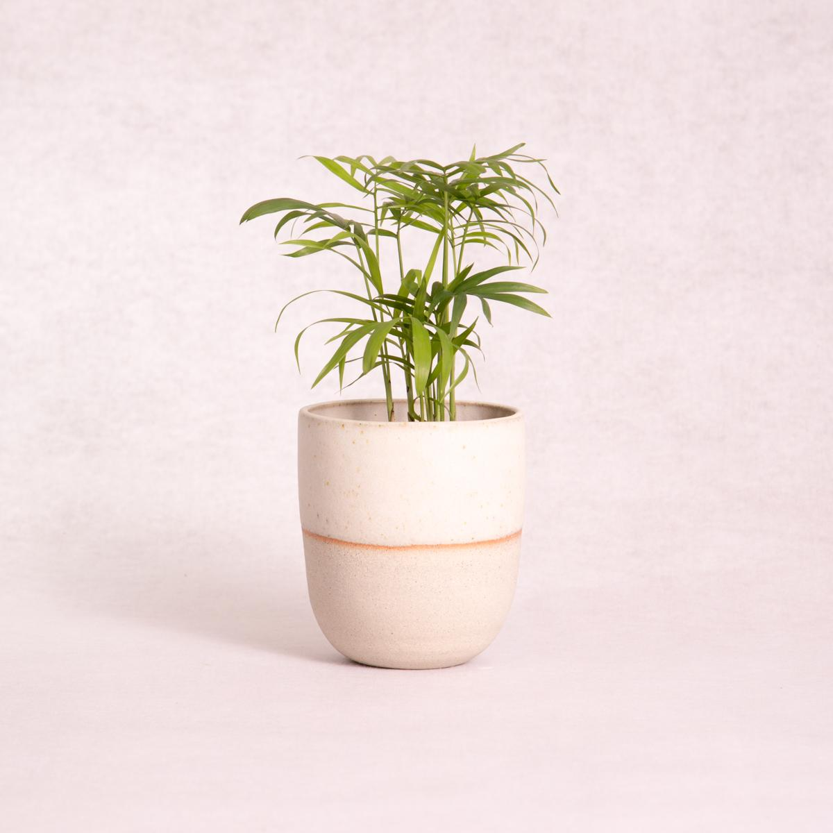 Ceramic Planter Pot - Small (Matte White Dip) - Ceramic Planter - Throw Some Seeds - Australian gardening gifts and eco products online!