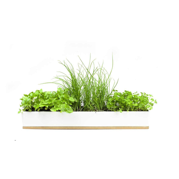 Micro Herbs Windowsill Growing Kit | Urban Greens - Growing Kit - Throw Some Seeds - Australian gardening gifts and eco products online!