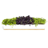Microgreens Windowsill Growing Kit | Urban Greens - Growing Kit - Throw Some Seeds - Australian gardening gifts and eco products online!