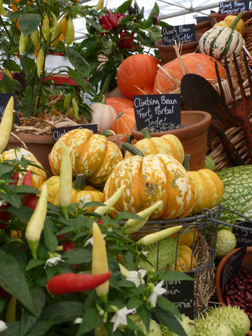 Image of pumpkins, gourds and chillies in the Grand Pavilion at RHS Chelsea 2021