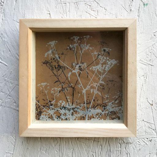 Etched Glass - Oxfordshire Cow Parsley