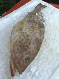 Grouper Slices