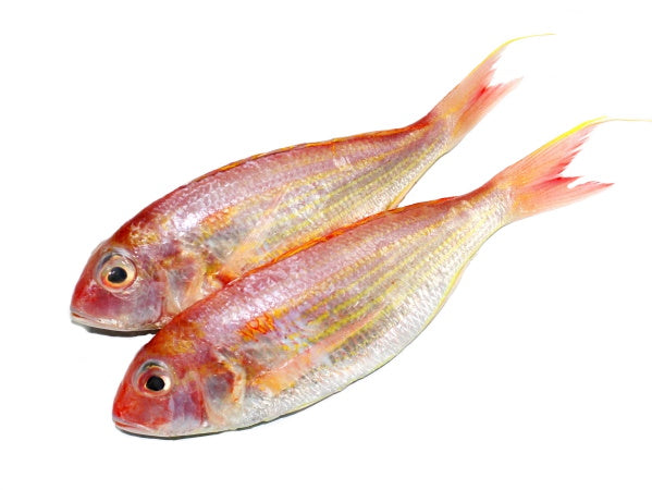 Bream / Kerisi 红哥里