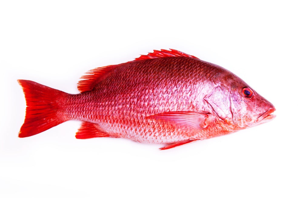 Red Snapper ( Wild Catch )