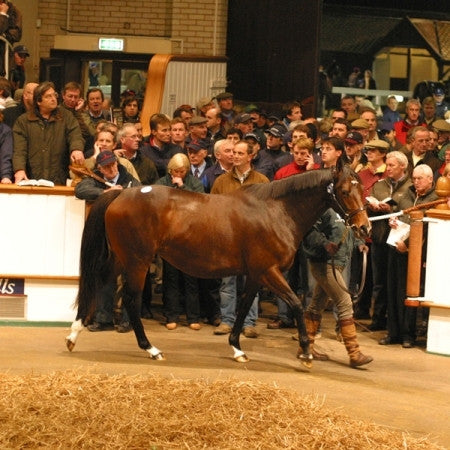 December Mares Sale Catalogue