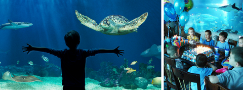 Vancouver aquarium kids birthday party
