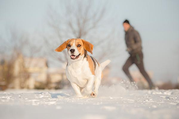 Tips to Keep Your Dog Safe in Winter