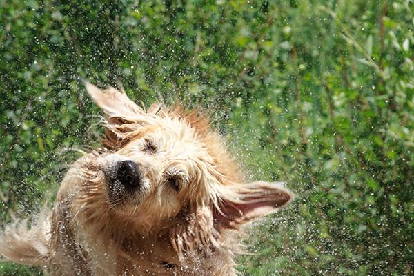 Eight Tips For Keeping Your Doggie Cool All Summer Long