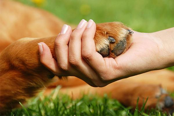 Treating and Preventing Dog Paw Injuries in the Summer Heat