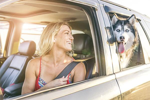 Crash-Tested Dog Car Safety Harness Product Review