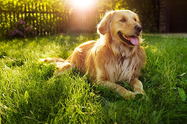 10 Ways to Keep Your Dog Safe This Summer