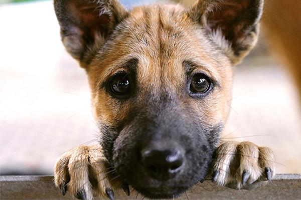 8 Tips to Help Your Dog When You Leave
