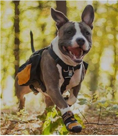 These Boots Are Made For Walkin': How And Why To Protect Your Dog's Feet