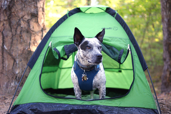 5 Easy Ways to Protect Your Dog From The Sun